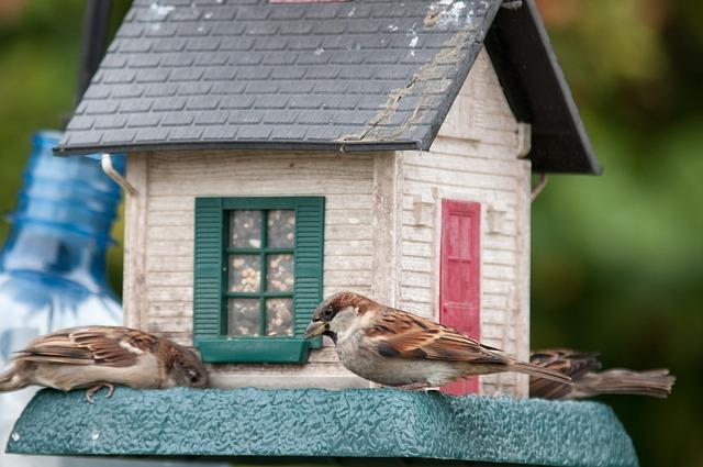 domek, budka pro ptáky, ptáčci
